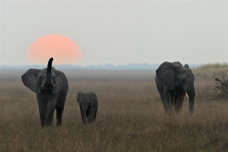 Must-sees in Botswana Before it is Too Late