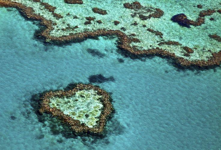 Great Barrier Reef - Queensland - Australia