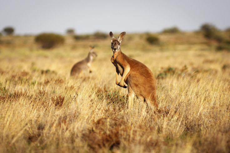 Flinders Ranges - Australia