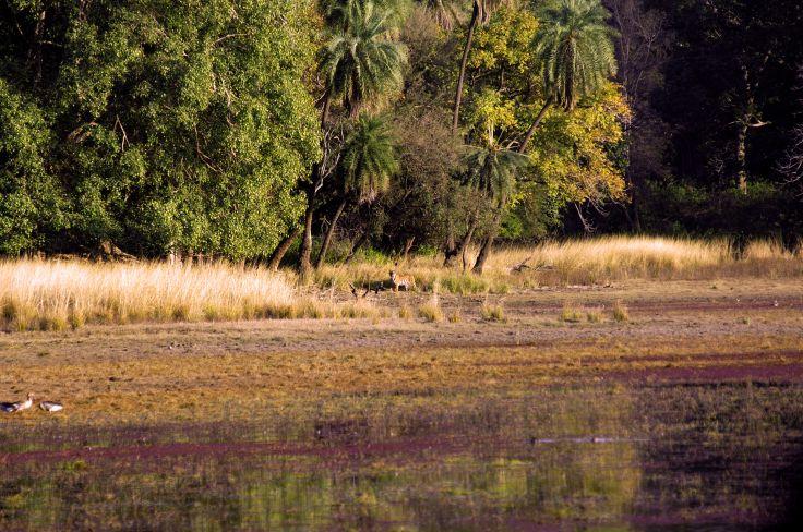 Bandhavgarh National Park - India