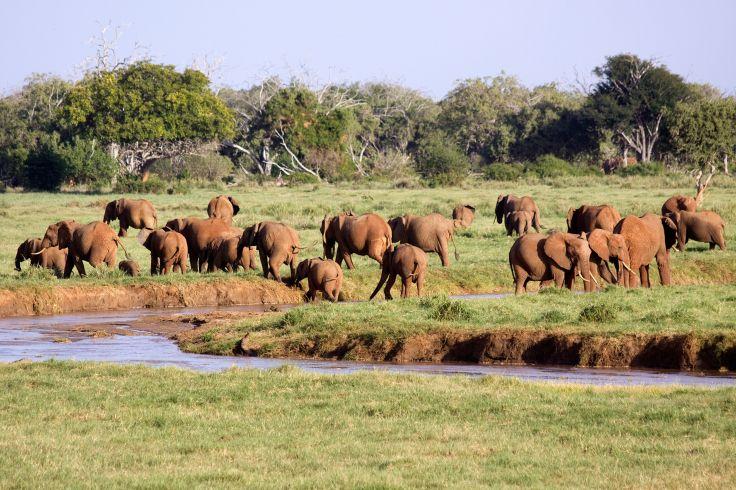 Park Tsavo - Kenya