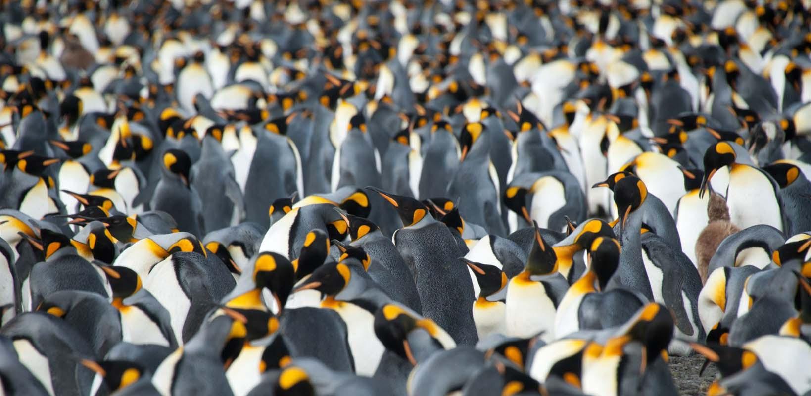 Georgie du Sud - Antarctique