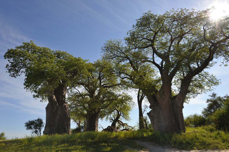 Nxai Pan National Park - Botswana