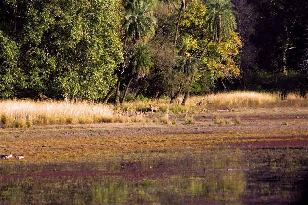 Parc national de Ranthambore - Rajasthan - Inde
