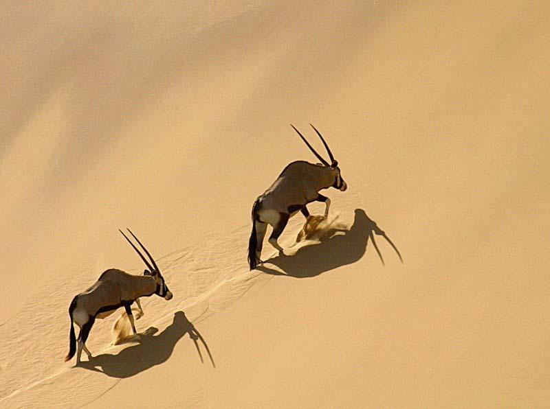 Skeleton Coast - Namibie