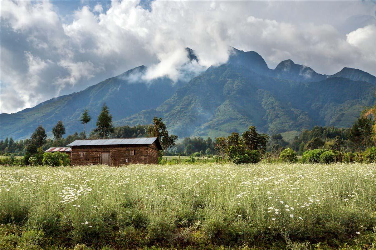 Volcan Sabyinyo - Rwanda