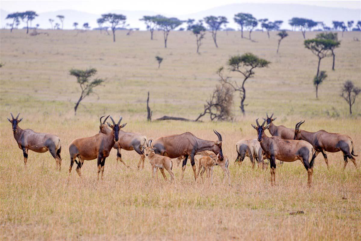 Parc national de Tarangire - Tanzanie