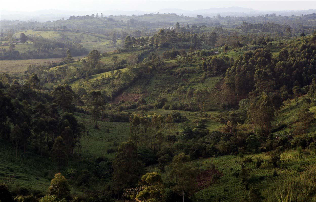 Parc national de Kibale - Ouganda