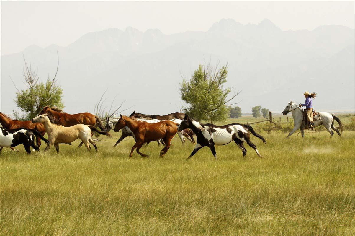 Zapata Ranch - Colorado - Etats-Unis