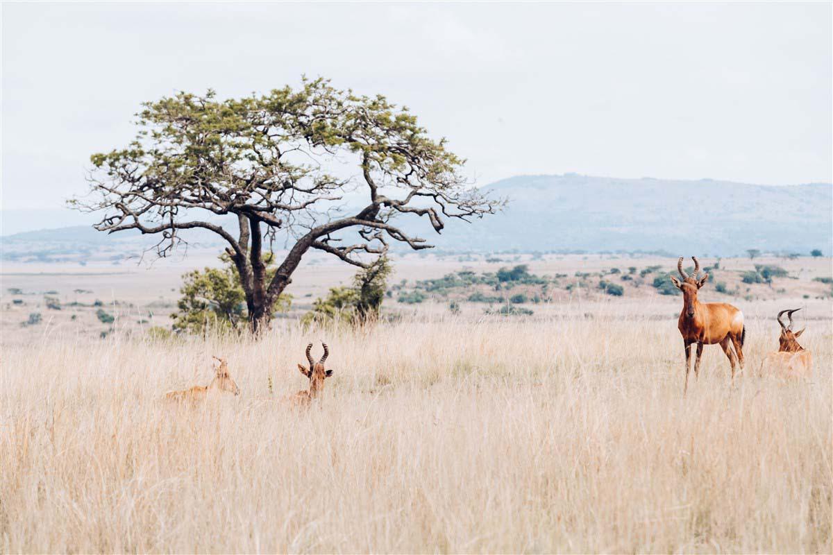 Ladysmith - KwaZulu-Natal - Afrique du Sud