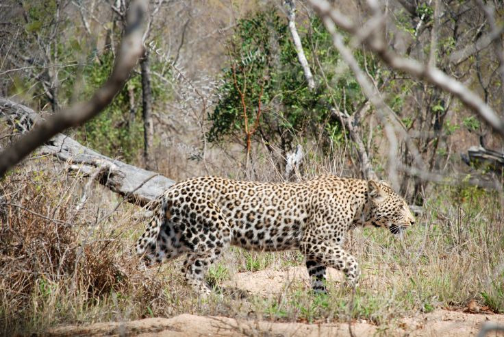 Sabi Sand Reserve - Mpumalanga - South Africa